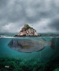 Ref: GZLo – 2013. Island: 25cm x 30cm – Photocreation: Gonzalo Villar